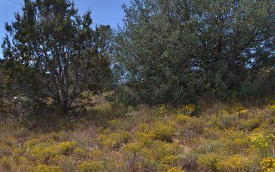 Desert Aromatics of the American Southwest