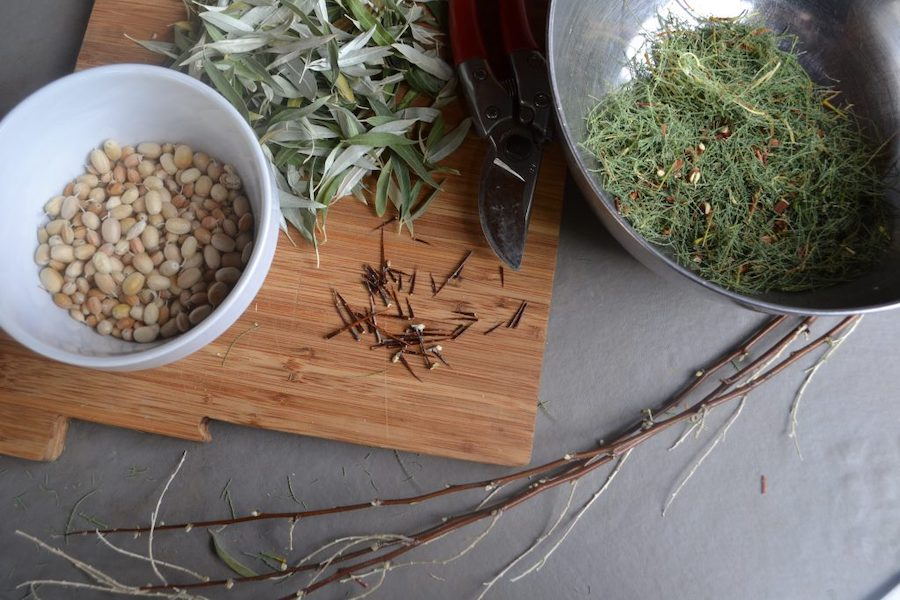 Aligning with Invasive Trees as Herbal Medicine